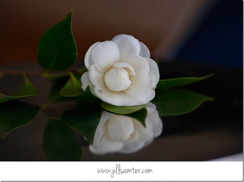 flower_5281