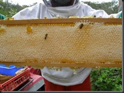 look at what the bees did in 6 weeks!