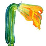 droopedflower.jpg