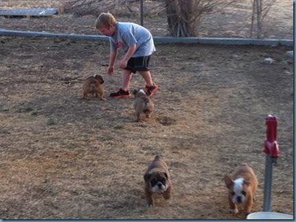 02-02-12 puppies iphone 04