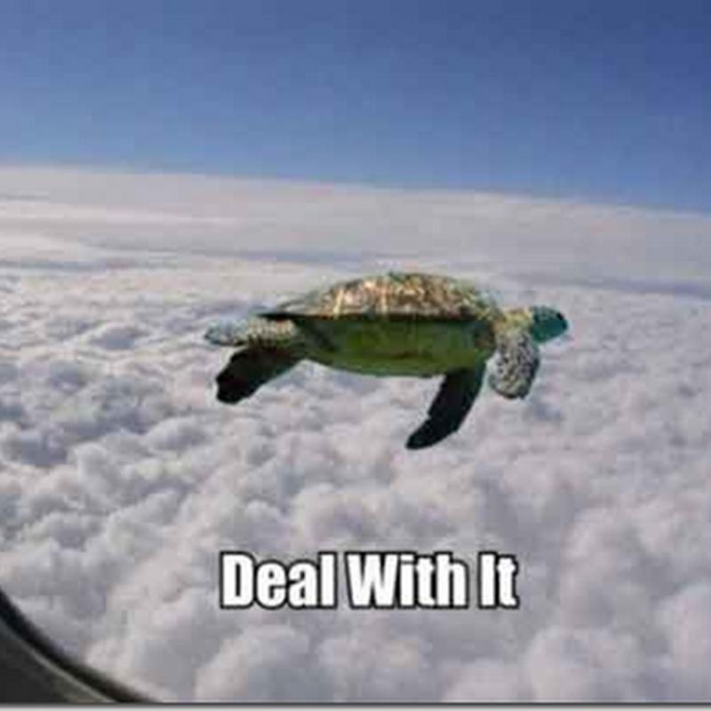 Bila penyu mula terbang ..