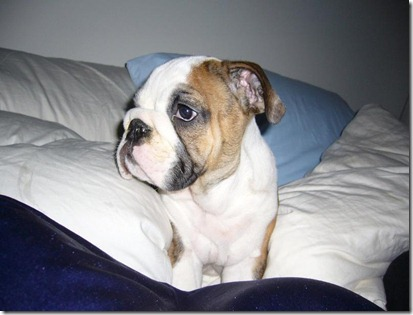 frank_on_the_prowl_in_our_bed