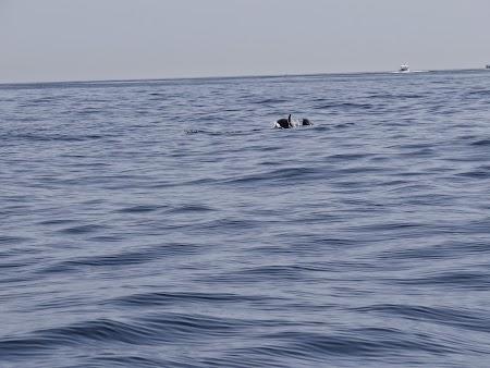 23. Delfini.JPG