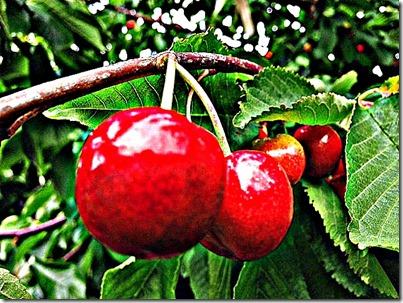 1-cherries