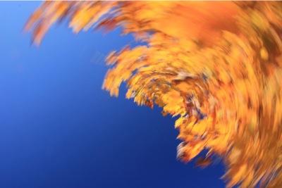 IMG_1233-2011-10-27-10-44.jpg