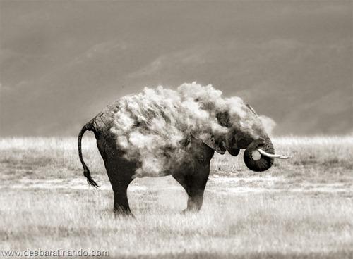 fotos de animais na hora certa desbaratinando  (12)