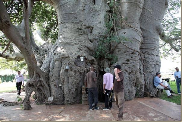 sunland-baobab-7[6]