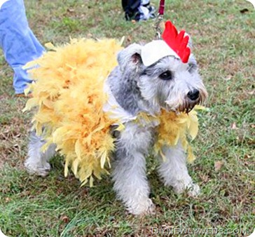 Dog Chicken Costume korrectkritterscom. San Diego Community News Group - Ghosts ghouls goblins  sc 1 th 216 & Chicken dog costume - Best Deals