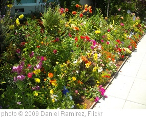 'Colorful Garden!' photo (c) 2009, Daniel Ramirez - license: http://creativecommons.org/licenses/by/2.0/