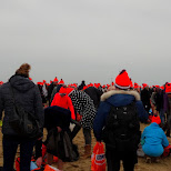 view of the new year's dive in Scheveningen, Zuid Holland, Netherlands