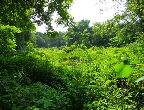 12. warbler pond-kab