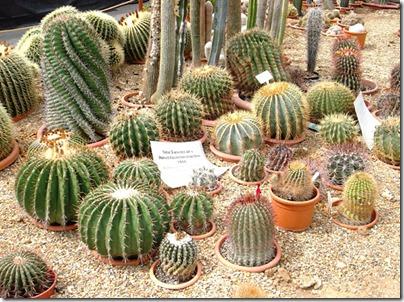 Cacti18-blog