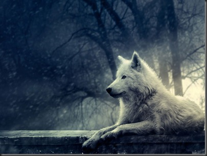 Night-Of-The-Wolf-Wallpaper