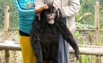 Amazing Pictures of Animals, photo, Nature, exotic, funny, incredibel, Zoo, Myanmar snub-nosed monkey, Alex (10)