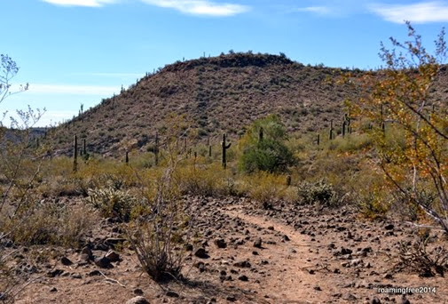 Following a burro trail