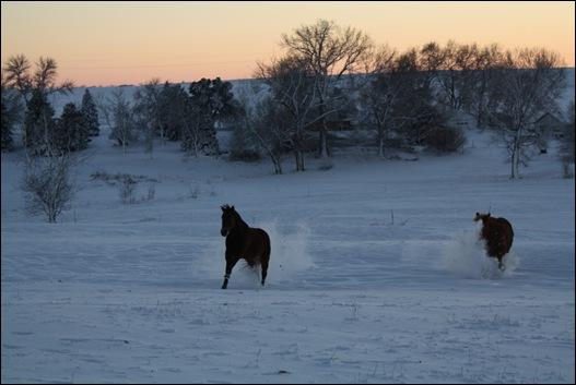 snow horses 025