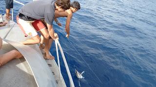 Eine illegale Longline wird konfisziert, zwei Thunfische ebenfalls.