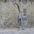 Endlich steht er auf! © Foto: Marco Penzel | Outback Africa Erlebnisreisen