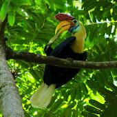 Hornbill (3).jpg