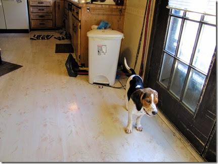 beagle10-01-14k