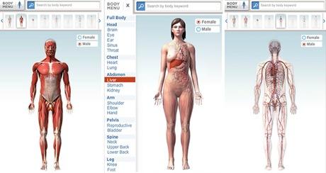 Navega por el Cuerpo Humano en 3D