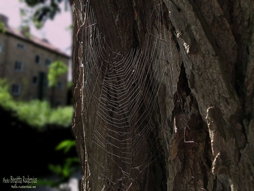macro_20110615_spidernet