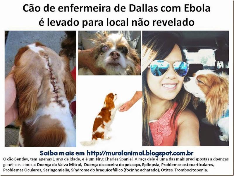 Cão de enfermeira de Dallas com Ebola2