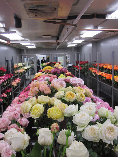 The entire store is a walk-in refrigerator and has hundreds of varieties of roses.