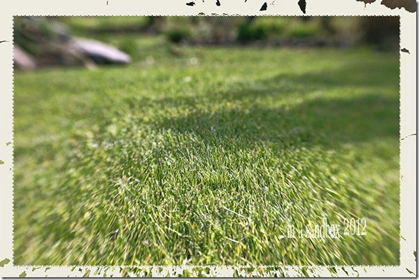grass with edge light pop grunge for web