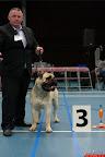 20130510-Bullmastiff-Worldcup-0550.jpg