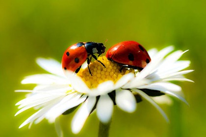 insects_iau743erd