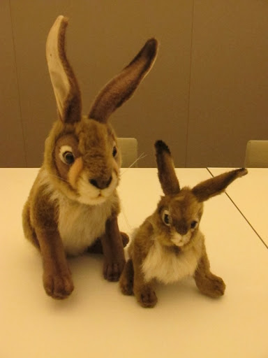 Aren't these bunnies gorgeous?