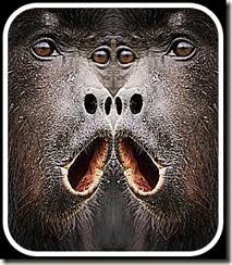 Two monkies
