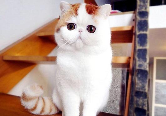 1-Милый кот Снупи