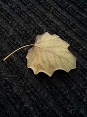 "Saw this on our outside rug when I stepped out to go to work. I thought, ""Well, fall is officially here!"""