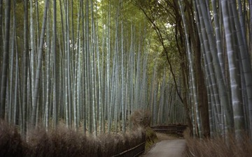 ROADS_BAMBOO