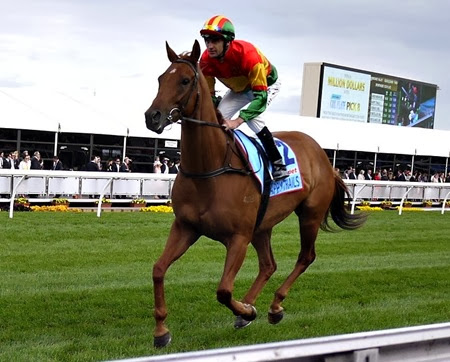 cox plate_happy trails 3