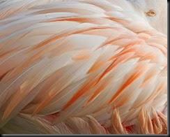 Flamingo David Nordell Image
