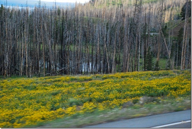 07-30-14 A Travel from E to W Yellowstone (58)