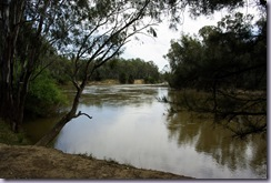 Murrumbidgee River at Pipers Reserve Camp Area