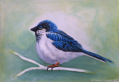 Acrylics Blue Swallow © Evelyn Howard 2011