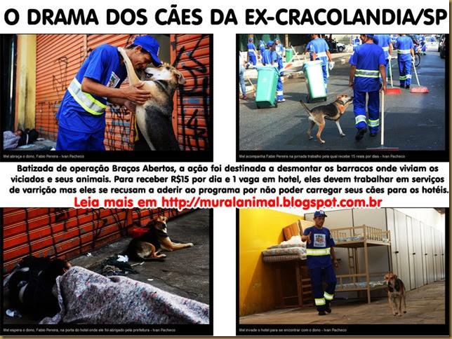 caes_cracolandia1