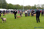 20100513-Bullmastiff-Clubmatch_30888.jpg