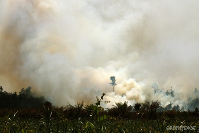 Rampant forest fires have been occurring in Indonesia's Riau province during the week of 26 August 2013, creating widespread haze over the area and worrying nearby Singapore and Malaysia. Photo: Oka Budhi / Greenpeace