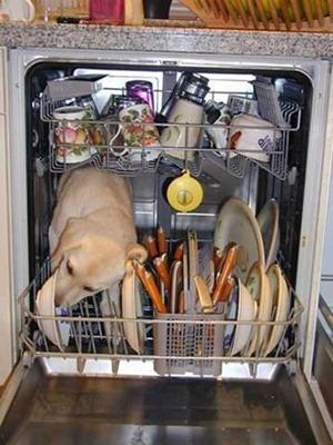 """Я же говорил: """"Будет плохо работать ваша посудомоечная машина, вызывайте срочную облизывательную помощь."""""""