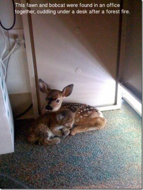 funny-animals-cute-15
