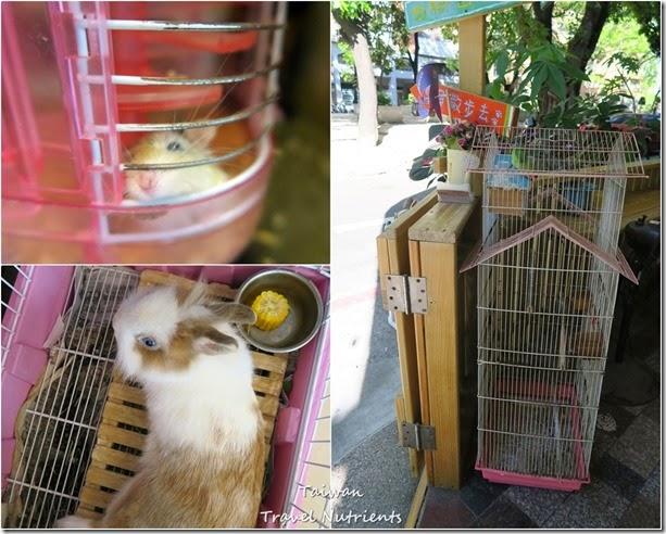 高雄Mona's Cafe, Mona House寵物友善餐廳,民宿 (62)