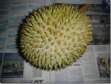 1 Durian D24