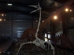 2008.09.05-003 Quetzalcoatlus northropi