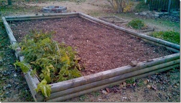garden 11